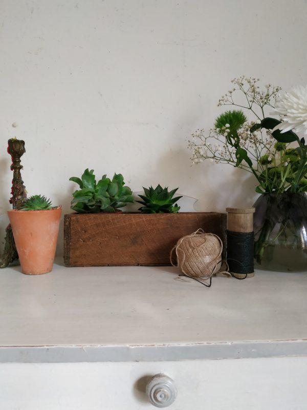 Détournée en mini jardinière cette petite boîte en bois sera parfaitement charmante.